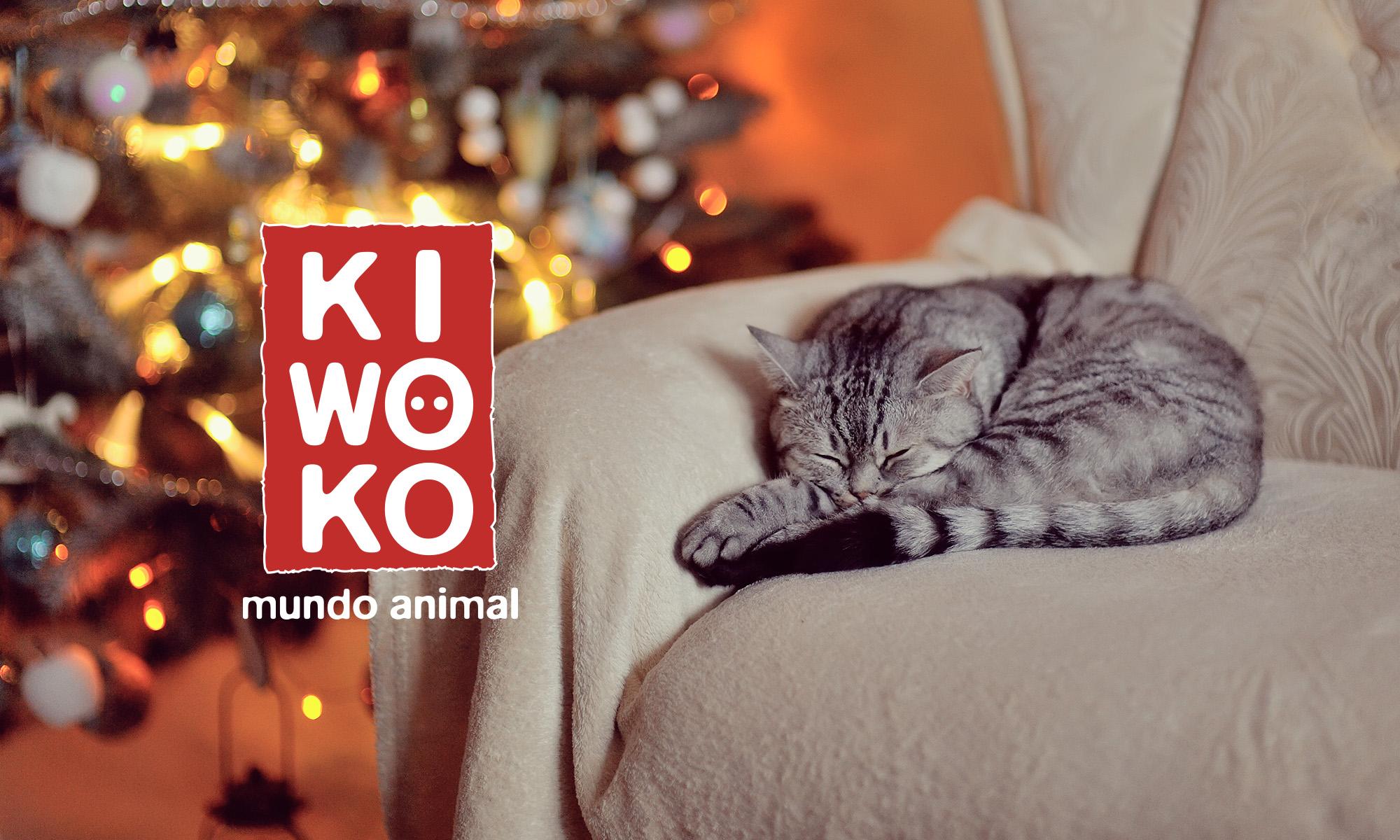 Kiwoko: Gestión de RRSS, eventos y comunicación